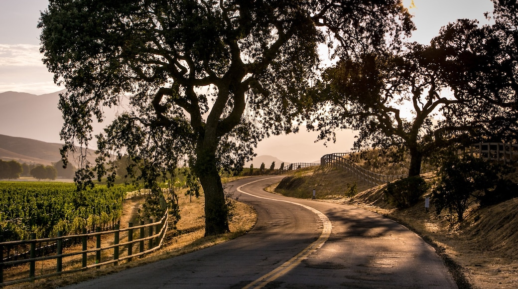 Santa Ynez Valley featuring tranquil scenes
