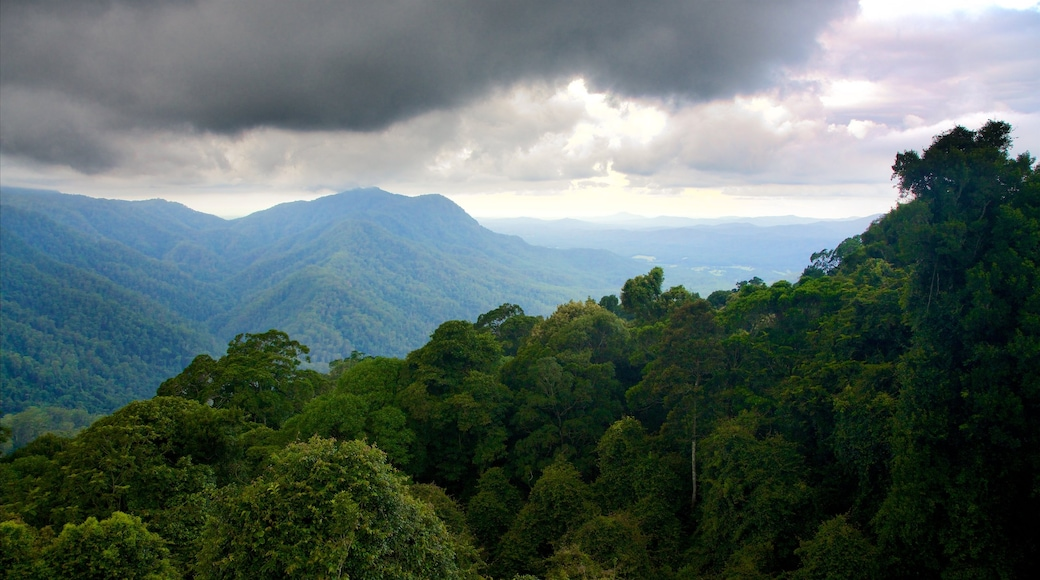 Dorrigo National Park which includes forest scenes and mountains