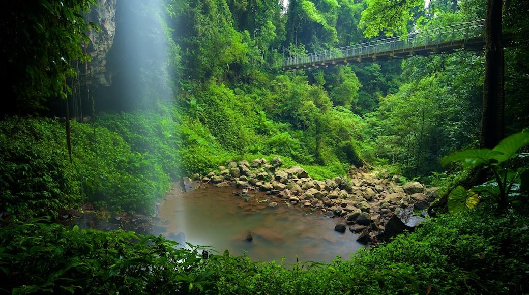 Dorrigo National Park showing a bridge, forest scenes and a lake or waterhole