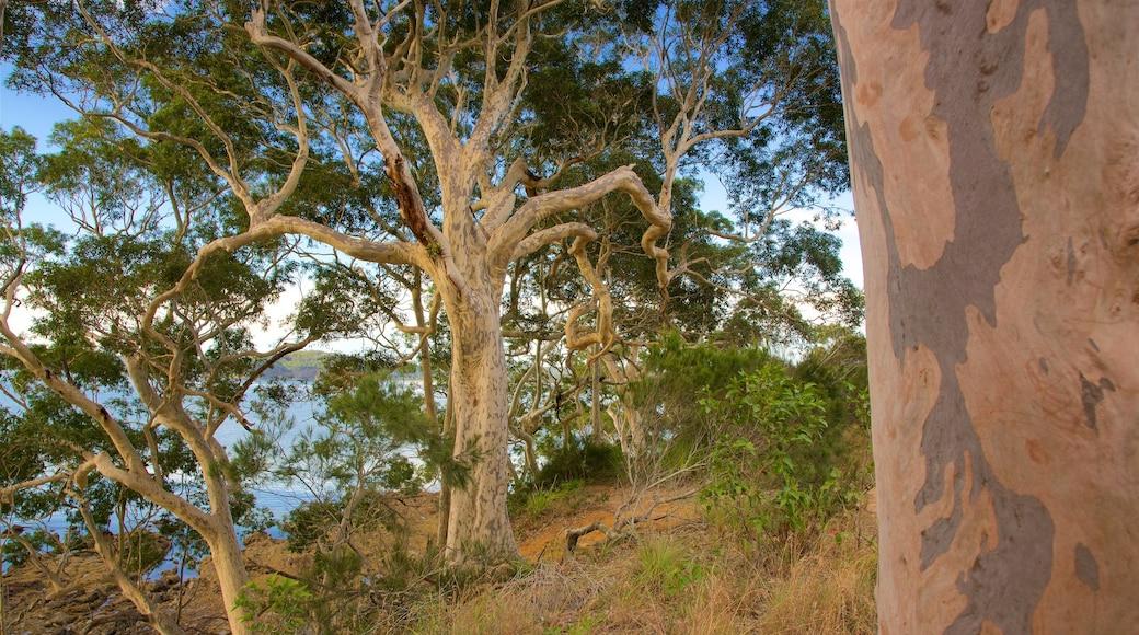 Batemans Bay showing forests