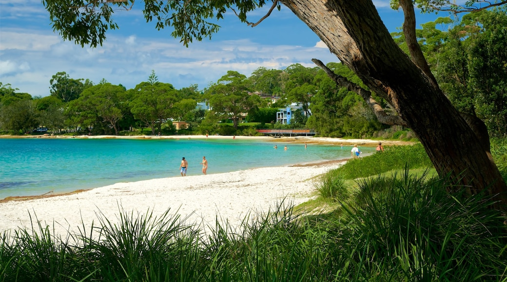 Collingwood Beach which includes general coastal views and a beach