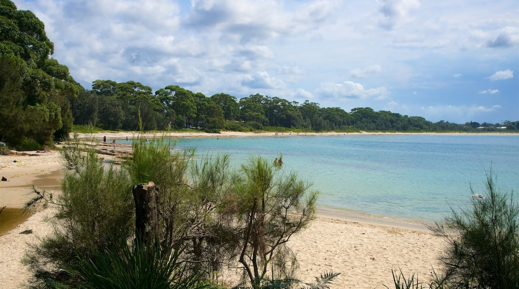 Collingwood Beach showing general coastal views and a sandy beach