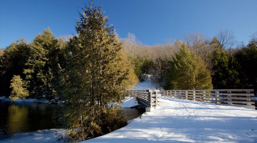 Gatineau Park featuring a bridge and snow