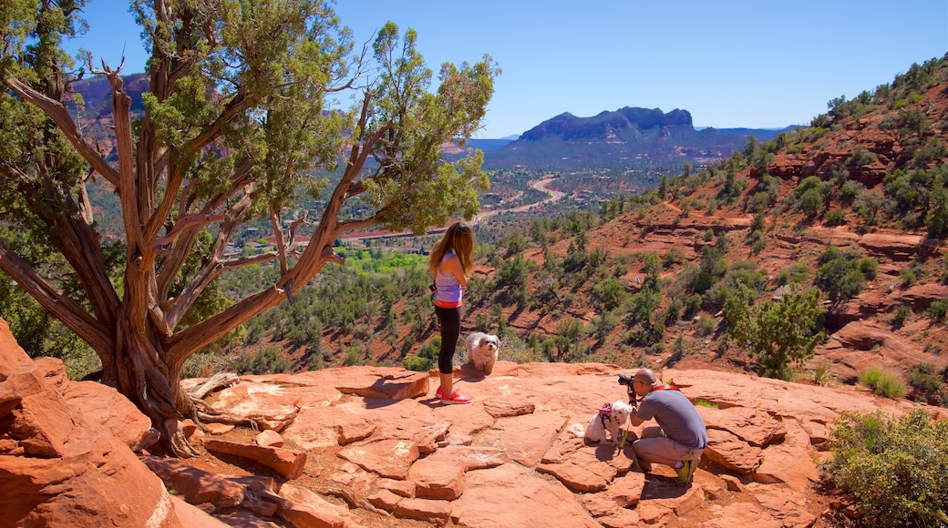 Sedona showing tranquil scenes, cuddly or friendly animals and a gorge or canyon