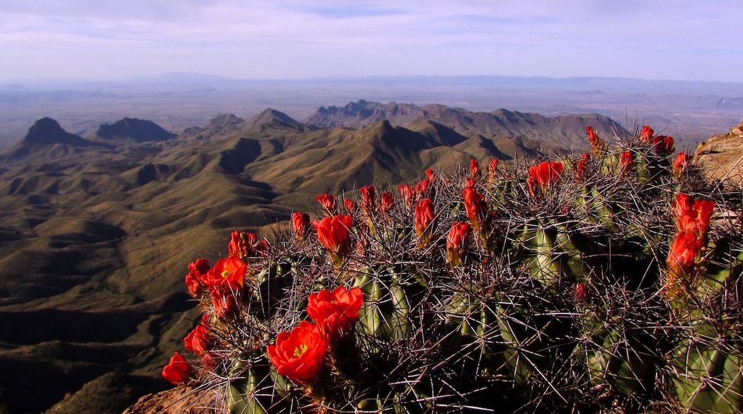 Big Bend National Park featuring landscape views, flowers and tranquil scenes