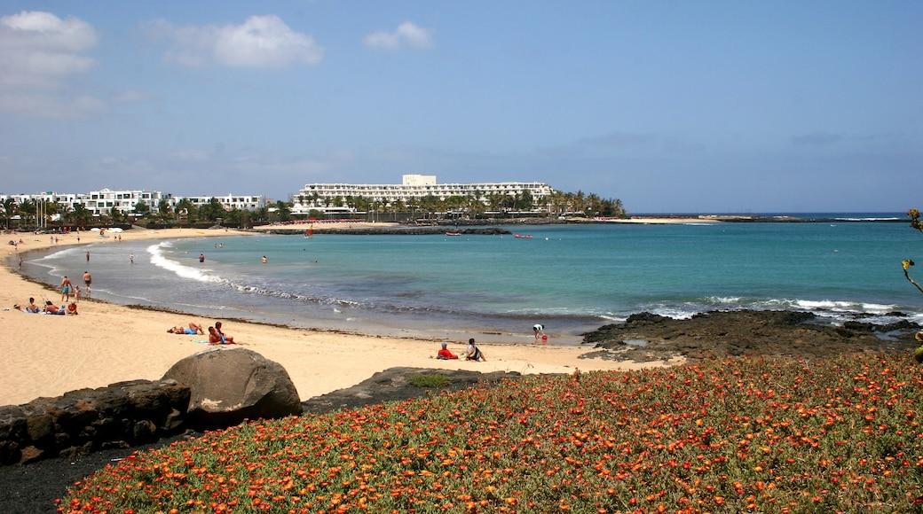 Lanzarote das einen Wildblumen, allgemeine Küstenansicht und Strand