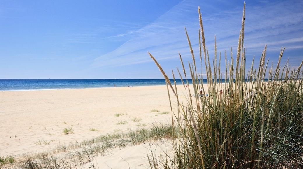 Huelva johon kuuluu yleiset rantanäkymät ja ranta