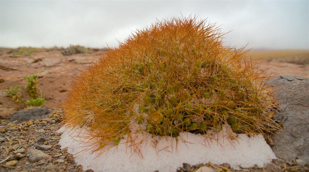 Región de Antofagasta das einen Wüstenblick