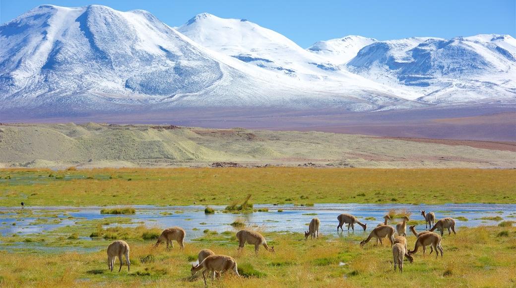 Nord-Chile mit einem See oder Wasserstelle, ruhige Szenerie und Landschaften