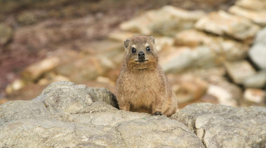 Tsitsikamma National Park welches beinhaltet niedliche oder freundliche Tiere