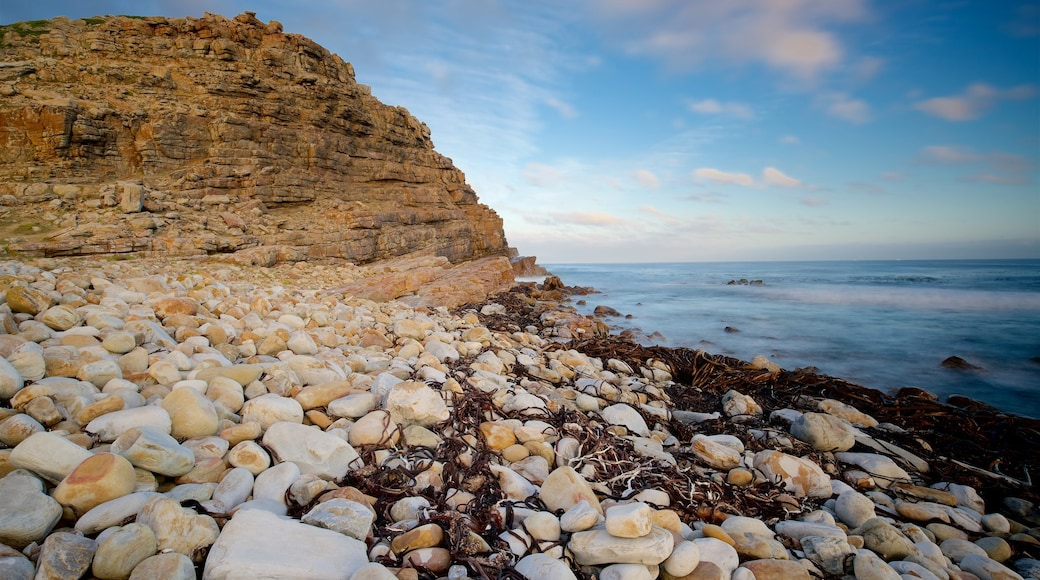 Cape of Good Hope which includes rocky coastline and a pebble beach