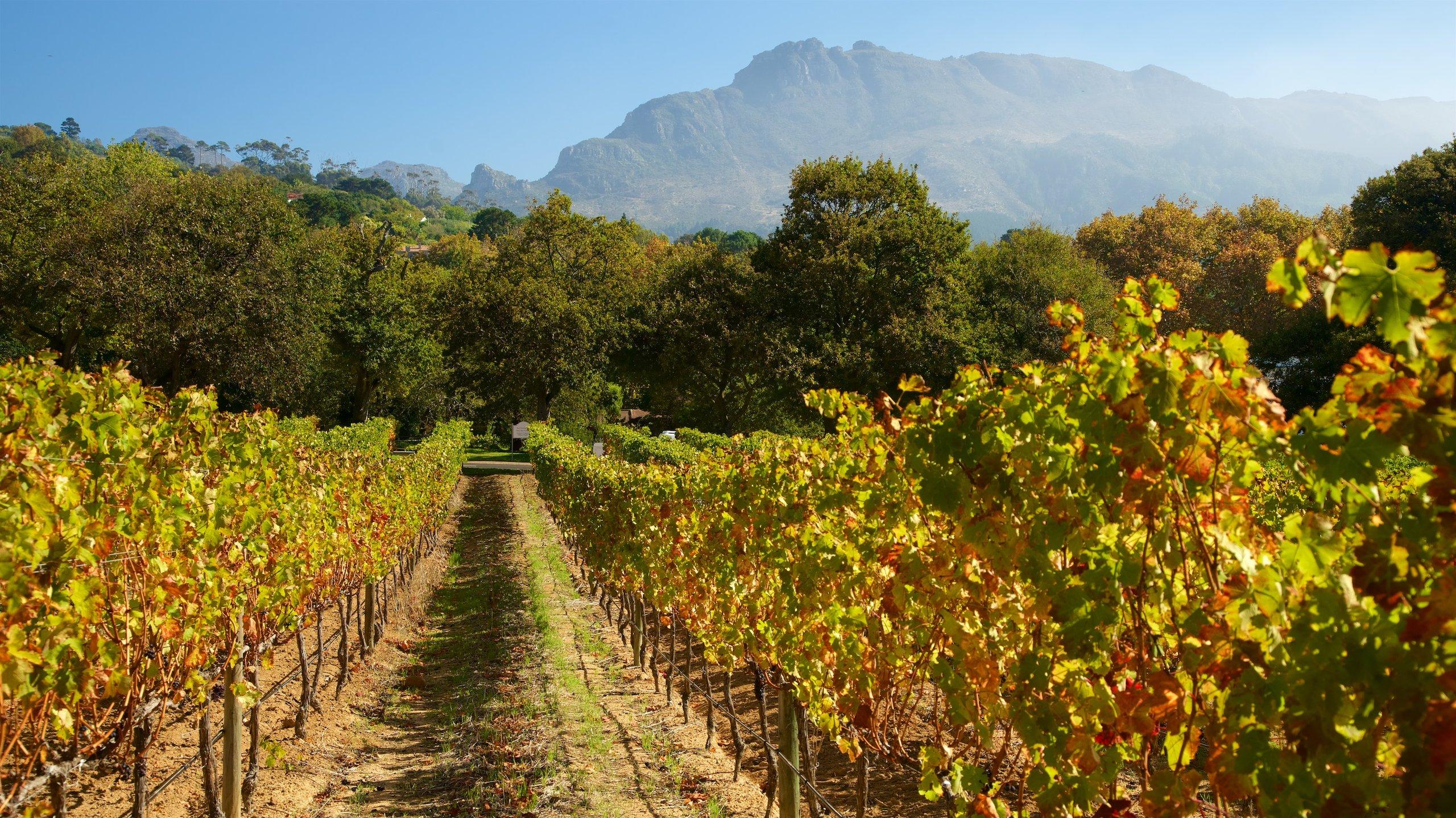 Wijnmakerij Groot Constantia, Kaapstad, Westkaap (provincie), Zuid-Afrika