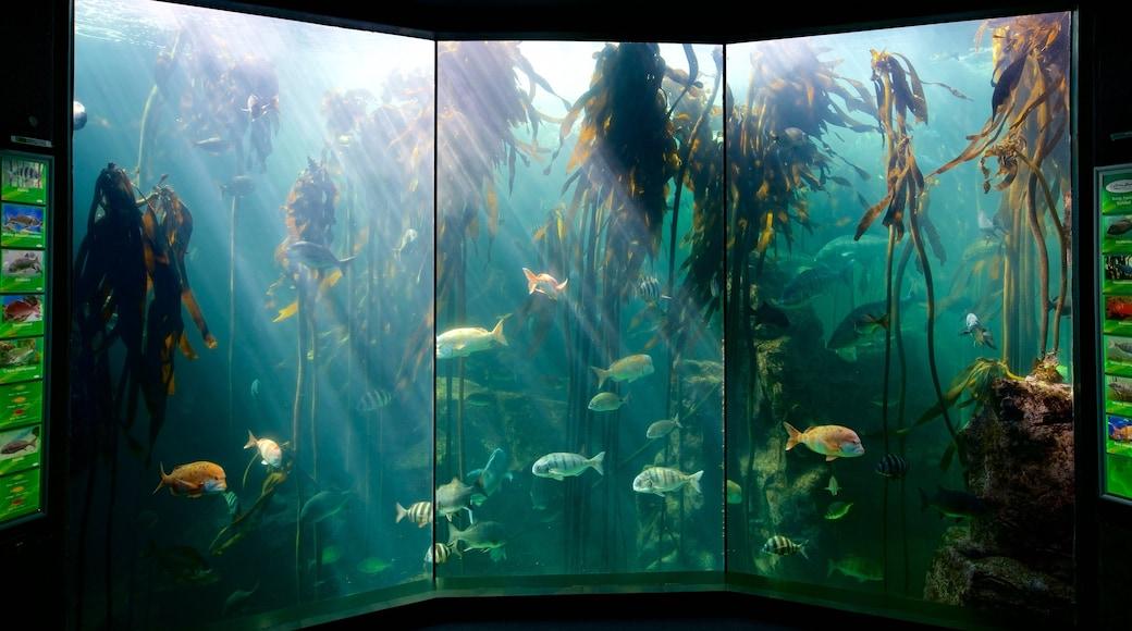 Two Oceans Aquarium featuring marine life