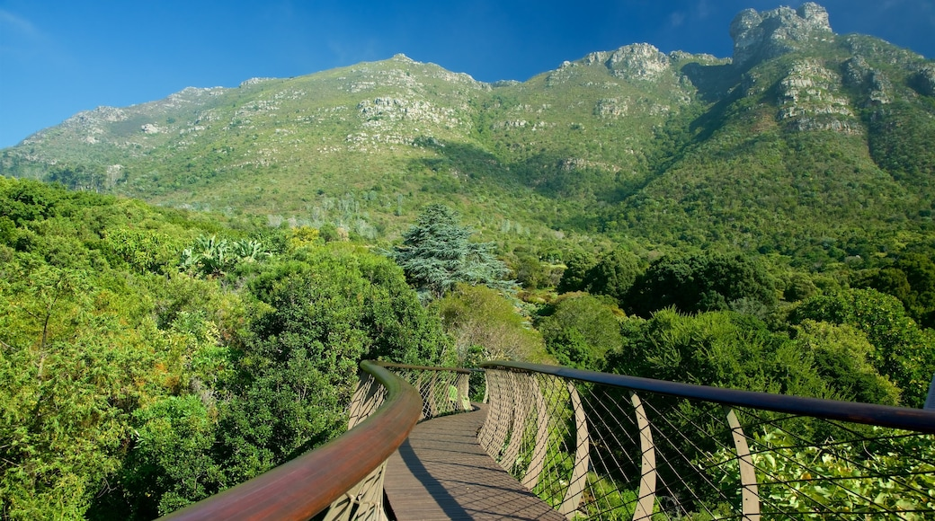 Kirstenbosch National Botanical Gardens che include parco e ponte