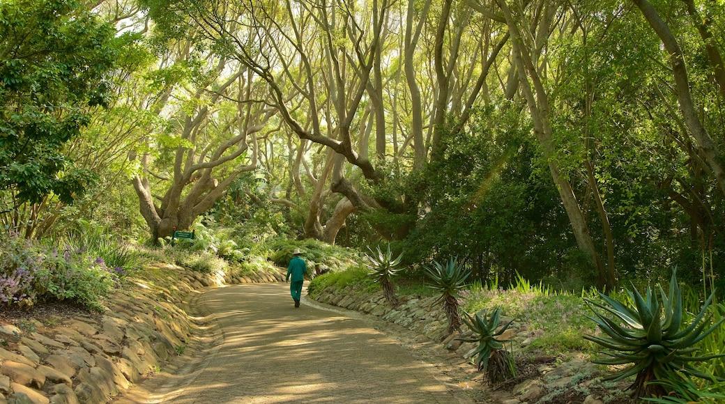 Kirstenbosch National Botanical Garden showing a garden