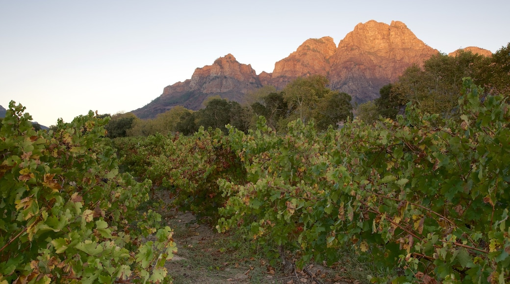 Boschendal Estate showing farmland and a sunset