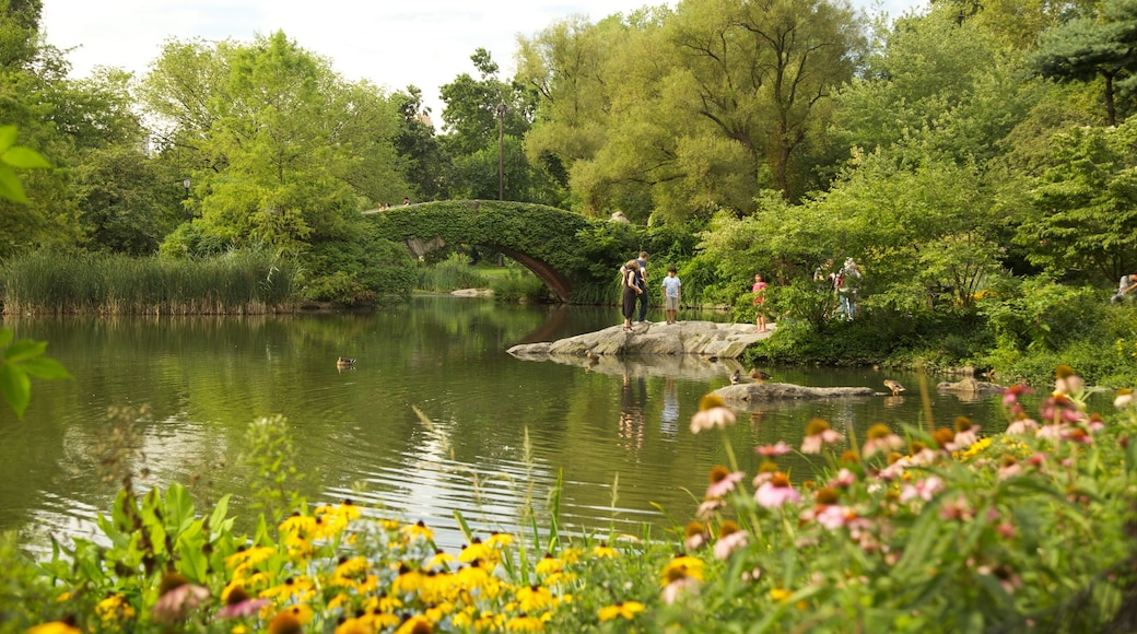 Central Park showing a pond, a park and flowers