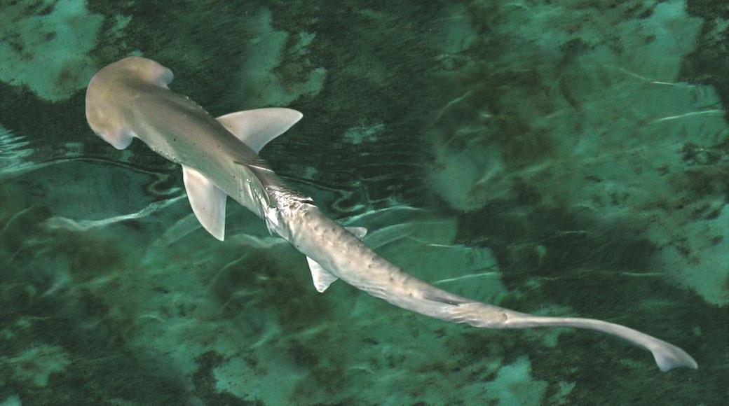 Shark Reef at Mandalay Bay featuring marine life