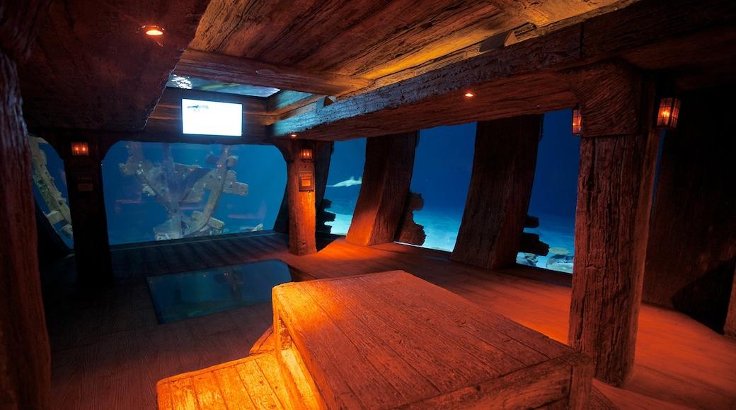Shark Reef at Mandalay Bay showing interior views