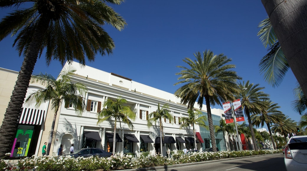Rodeo Drive featuring a city, tropical scenes and street scenes