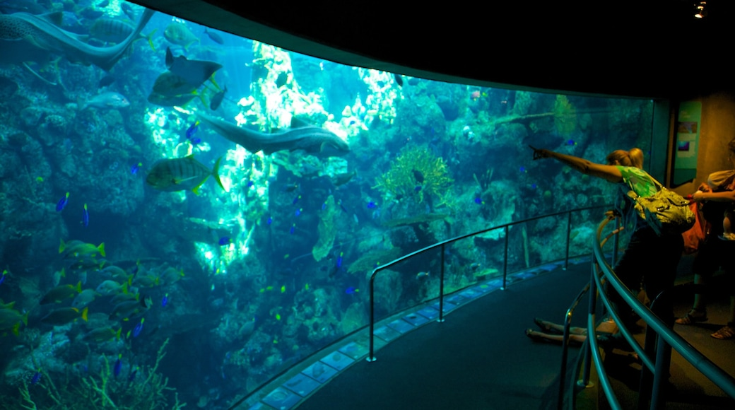 Aquarium of the Pacific showing marine life and interior views