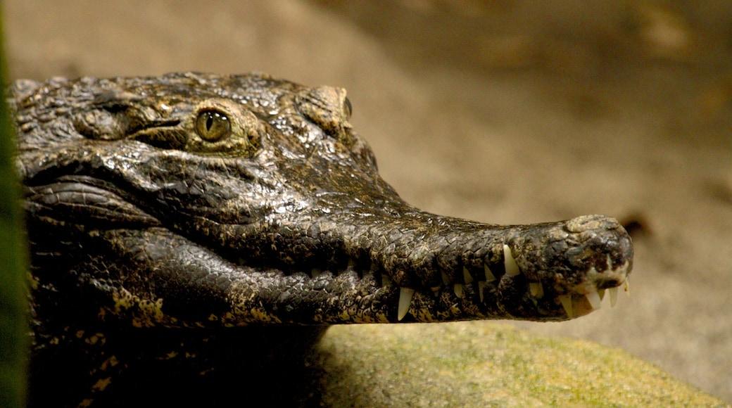 Oregon Zoo showing dangerous animals