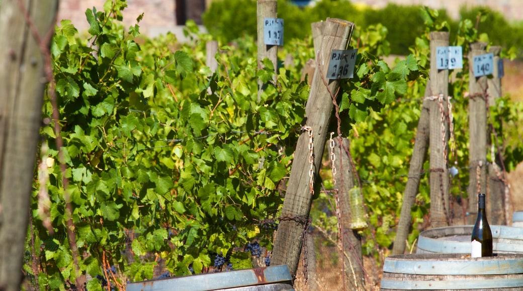 Cooper Mountain Vineyards featuring farmland