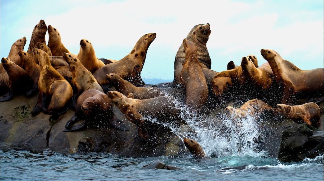Mayne Island featuring marine life