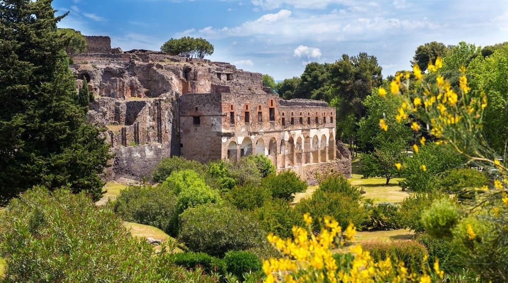 Pompei welches beinhaltet Wildblumen, Geschichtliches und Gebäuderuinen