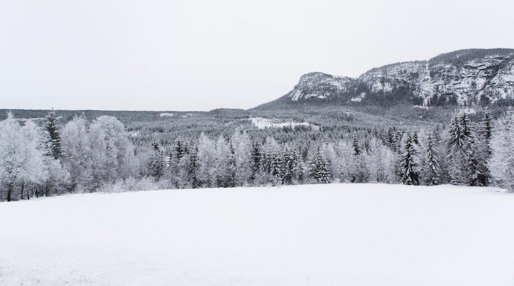 Rjukan som inkluderer snø og landskap