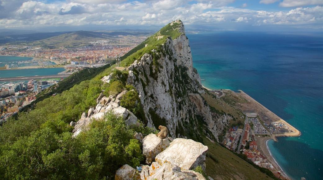 直布羅陀山 设有 綜覽海岸風景, 山 和 山水美景