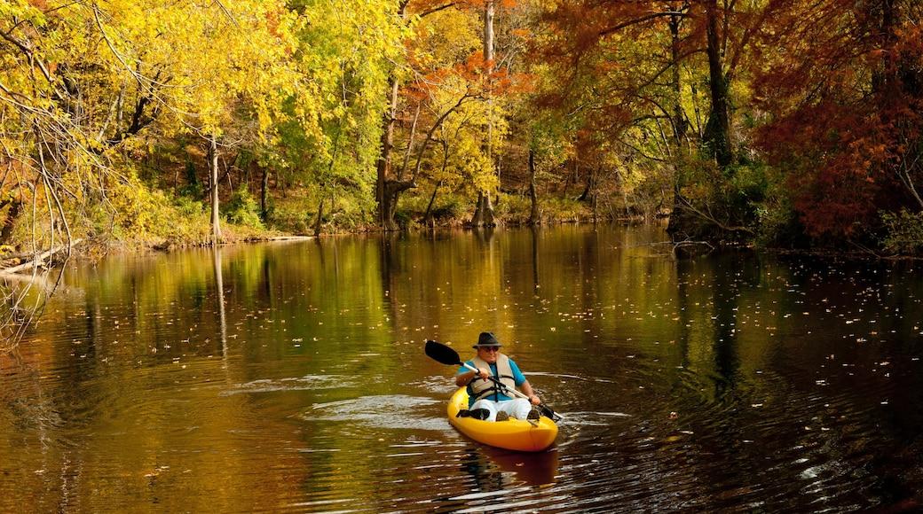 Pinnacle Mountain State Park mostrando foresta, kayak o canoa e fiume o ruscello