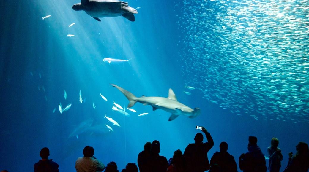 Monterey Bay Aquarium mostrando vida marinha assim como um pequeno grupo de pessoas