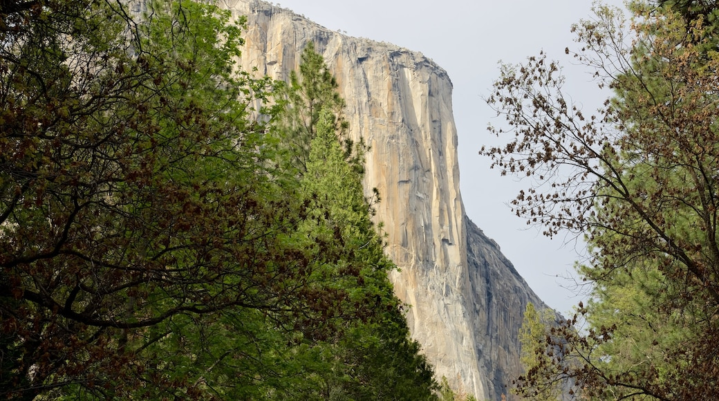 El Capitan which includes forest scenes and a gorge or canyon