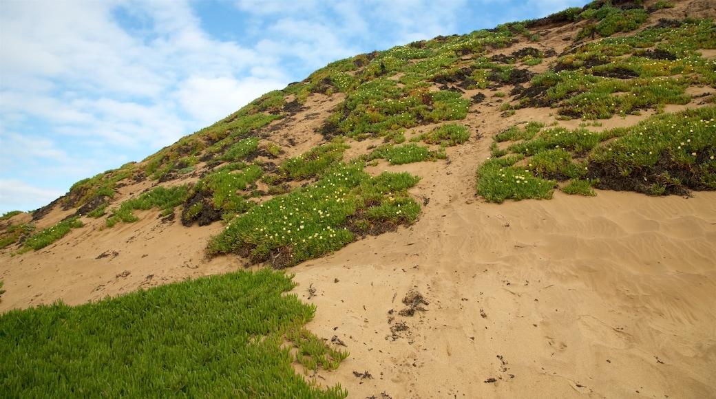 Fort Ord Dunes State Park mostrando uma praia