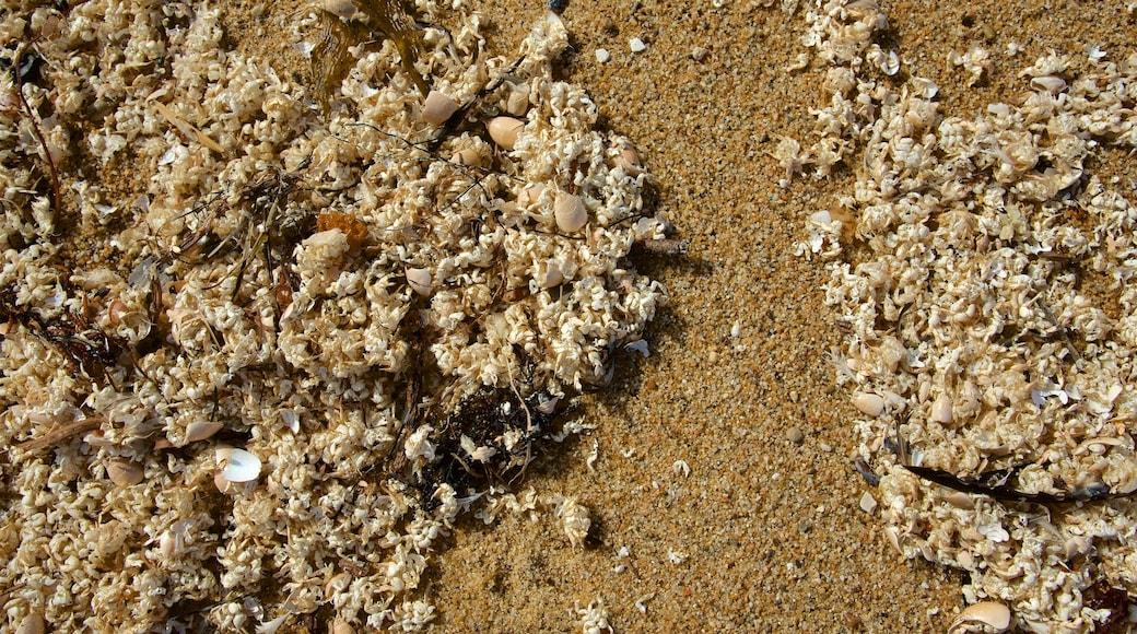 Fort Ord Dunes State Park mostrando uma praia de areia