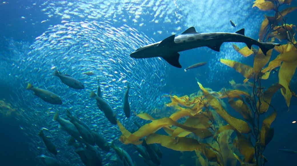 Monterey Bay Aquarium featuring marine life