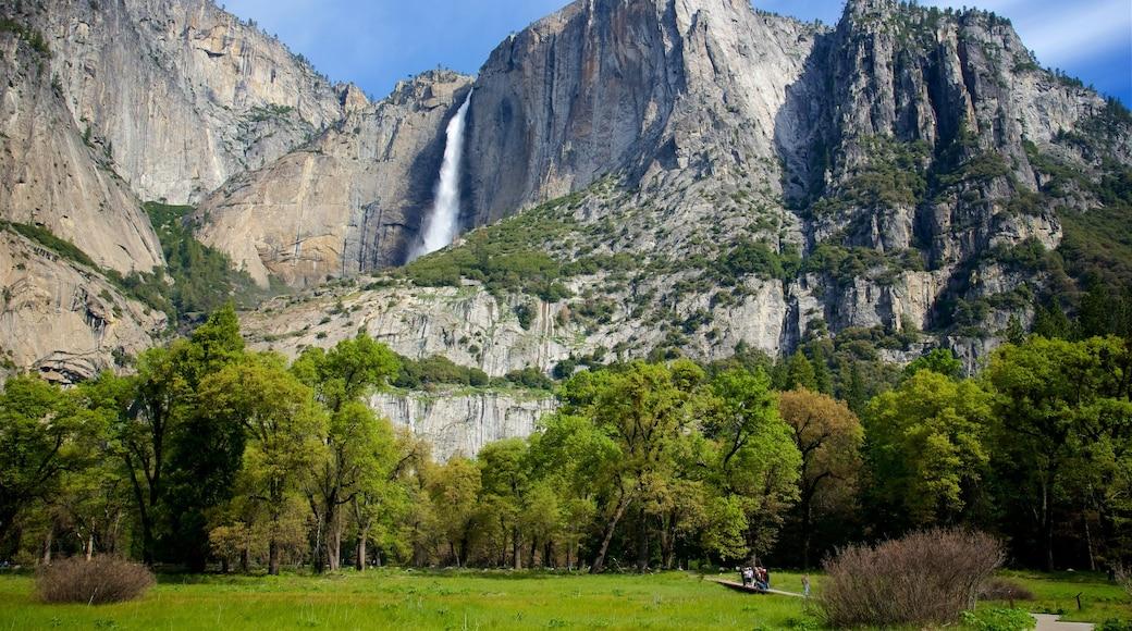 Yosemiten kansallispuisto featuring vuoret, vesiputous ja puisto