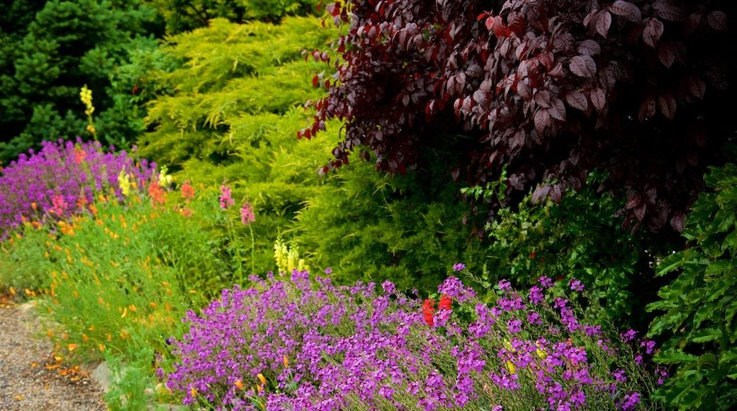 Mariposa mettant en vedette scènes forestières et fleurs