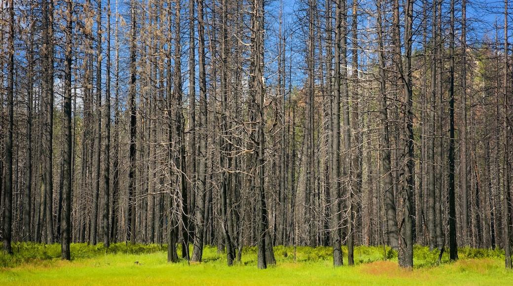 Hetch Hetchy Reservoir johon kuuluu metsänäkymät
