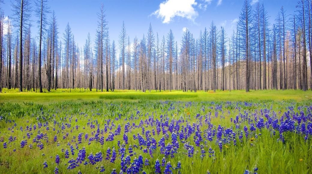 Hetch Hetchy Reservoir joka esittää rauhalliset maisemat, metsänäkymät ja luonnonvaraiset kukat