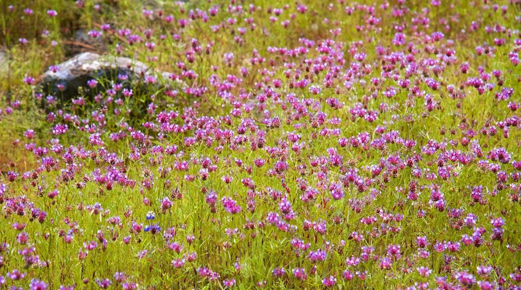 Hetch Hetchy Reservoir johon kuuluu luonnonvaraiset kukat