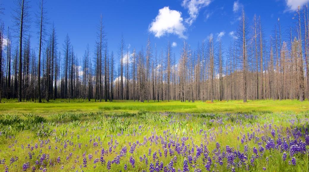 Hetch Hetchy Reservoir featuring rauhalliset maisemat, metsät ja luonnonvaraiset kukat