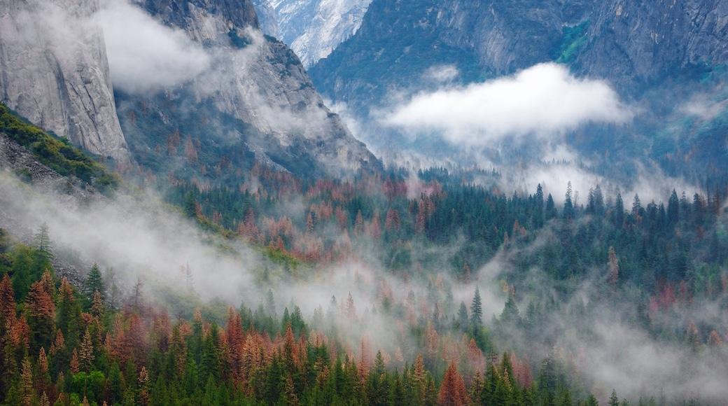 Tunnel View joka esittää usvaa tai sumua ja metsänäkymät
