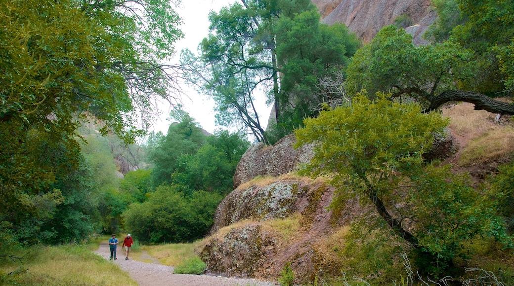 Pinnacles National Park que inclui escalada ou caminhada e cenas tranquilas