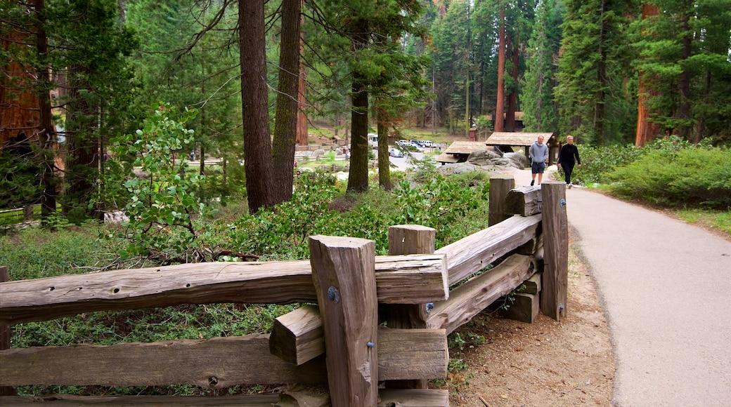 Sequoia National Park mettant en vedette forêts