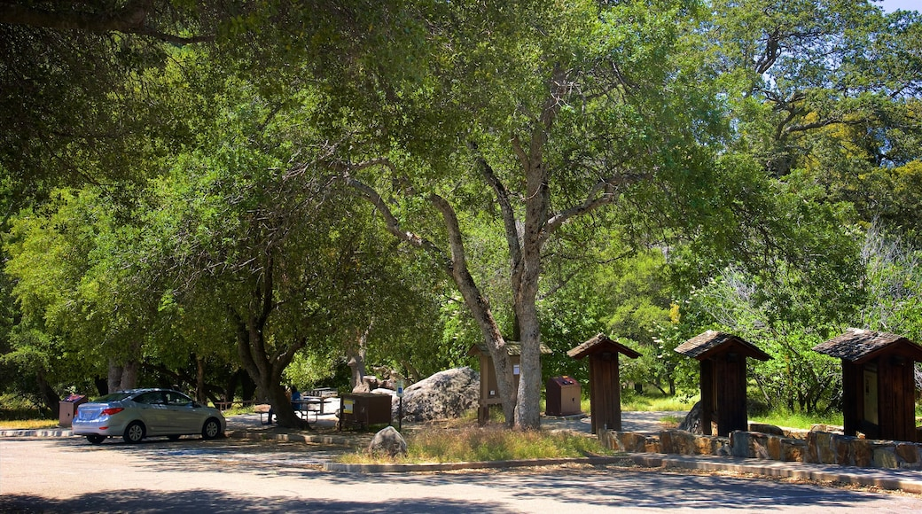 Hospital Rock montrant forêts et parc
