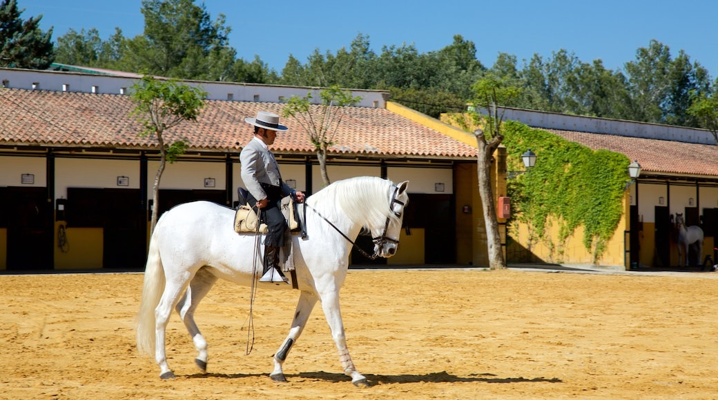 Jerez de la Frontera og byder på landdyr såvel som en mand