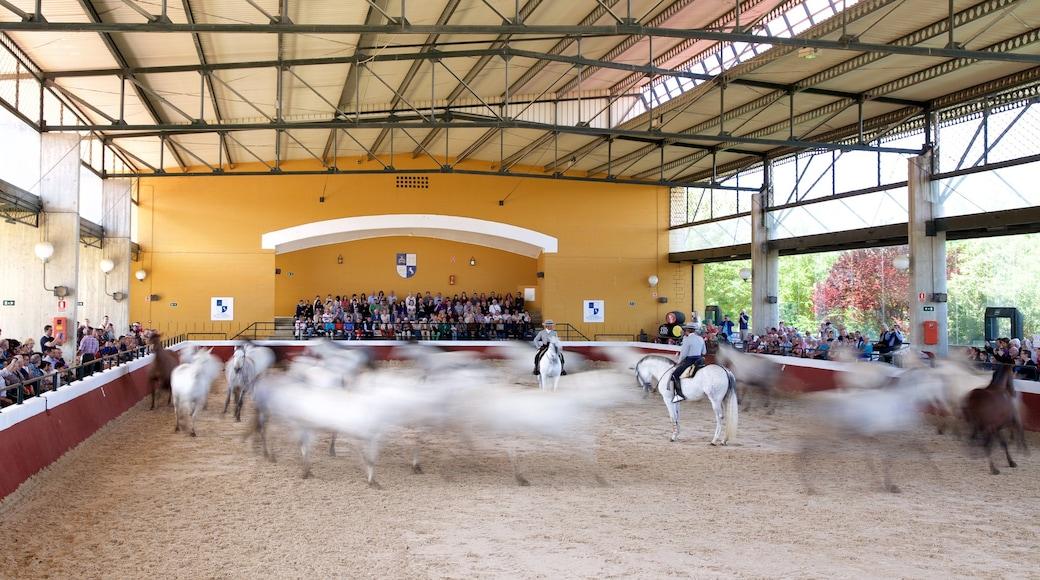Jerez de la Frontera mit einem Landtiere und Performance-Kunst sowie große Menschengruppe