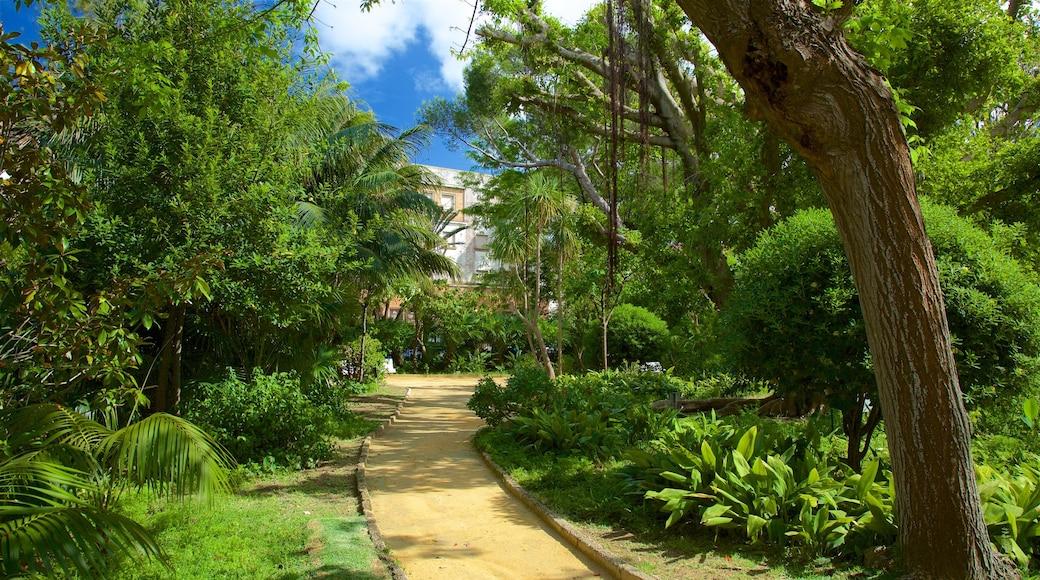Cadiz showing a garden